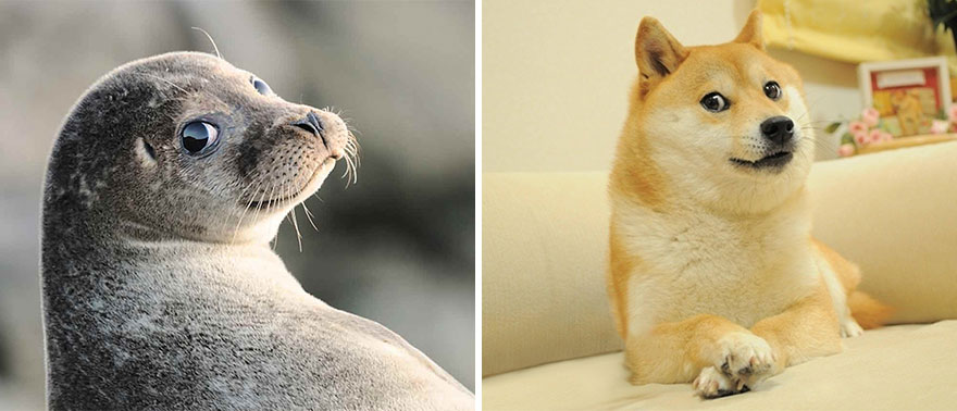 funny-seals-look-like-dogs-108-574d82b7336cc__880