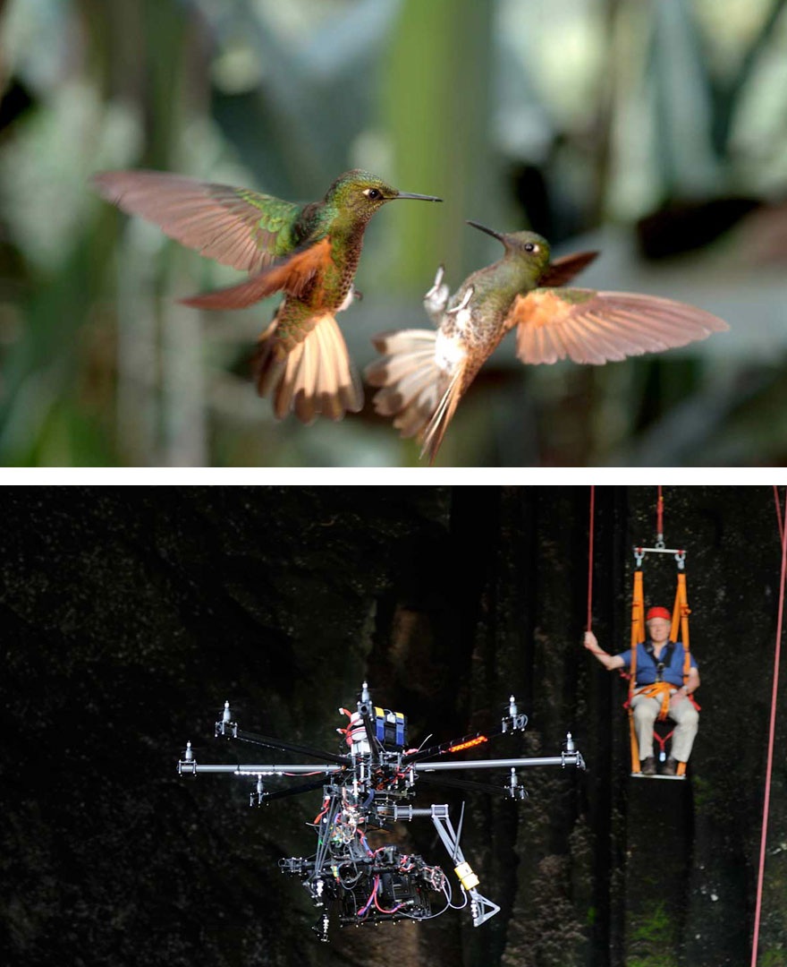 #25 Capturing The Hummingbirds With 3D Camera