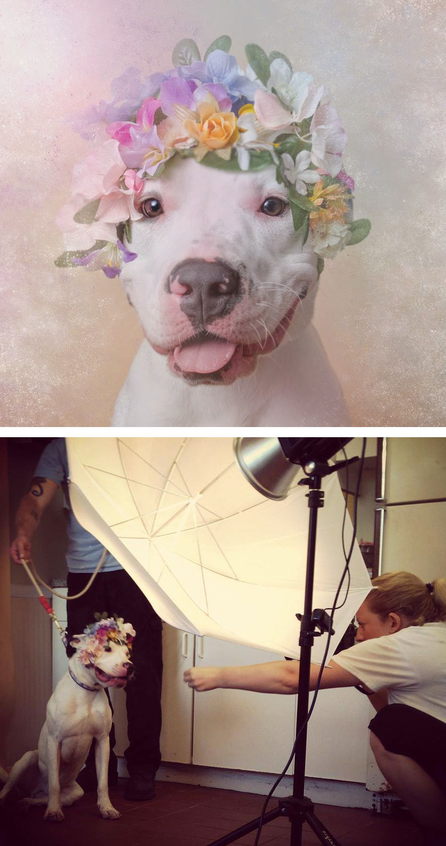 #26 Behind The Scenes Of Pit Bull Flower Power Photoshoot