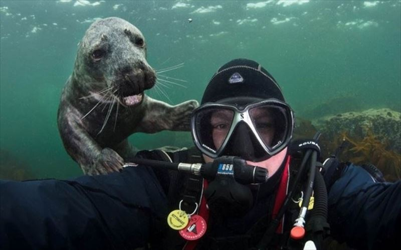 Animal-Photobombs26_R