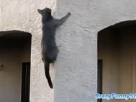 Spider Cats_R