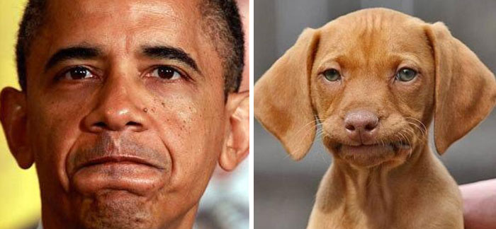 humans-look-like-dogs-doppelganger (15)