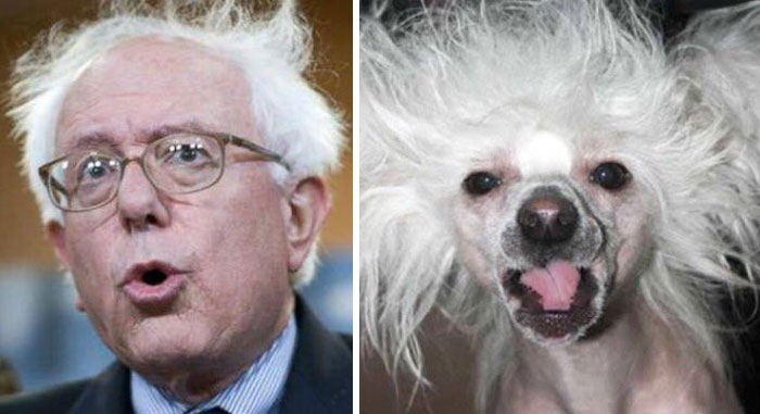 humans-look-like-dogs-doppelganger (2)