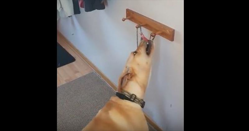 dog-wants-to-go-for-a-walk-4_r