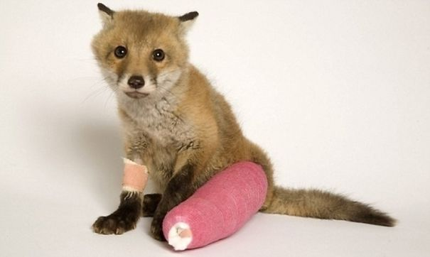 animals-in-tiny-casts-10