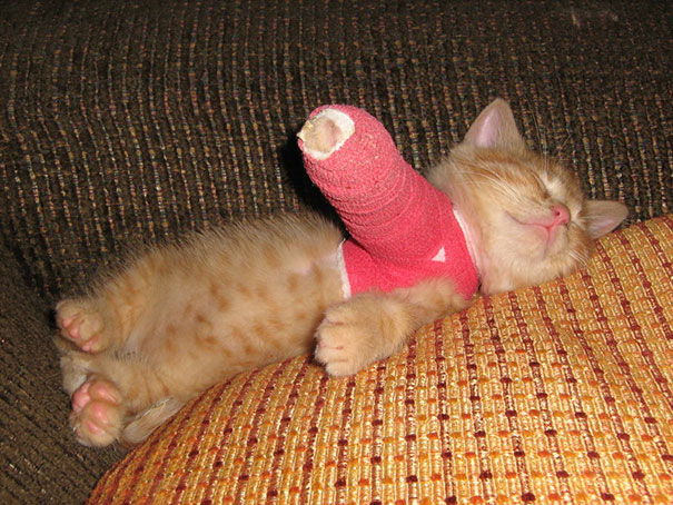 animals-in-tiny-casts-2