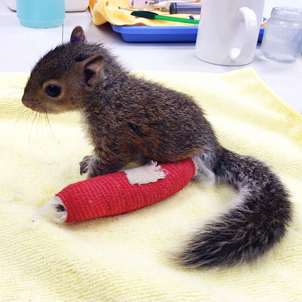 animals-in-tiny-casts-5