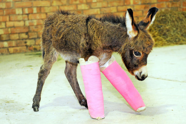 animals-in-tiny-casts-8
