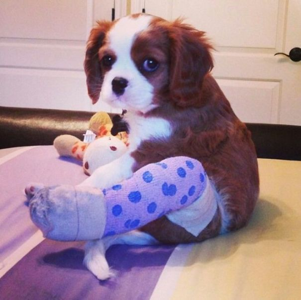 animals-in-tiny-casts-9
