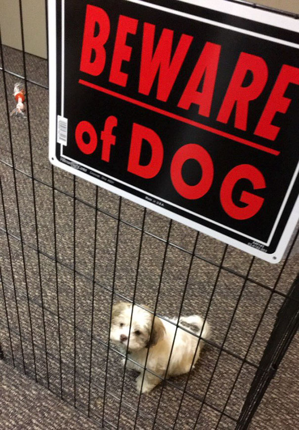 beware-of-the-dog-signs-1