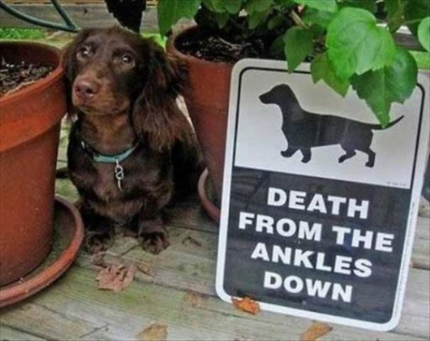 beware-of-the-dog-signs-10