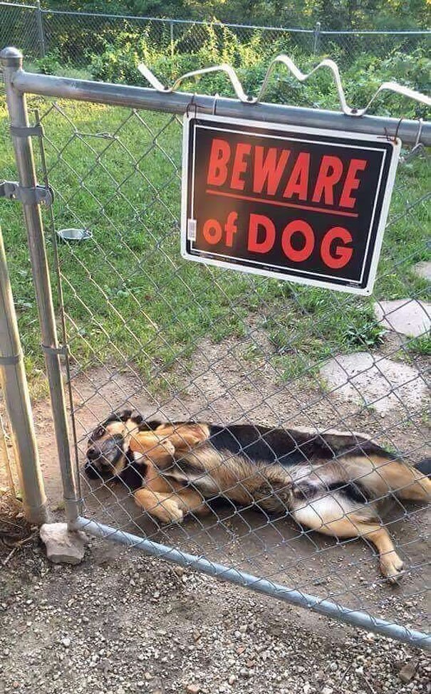 beware-of-the-dog-signs-13