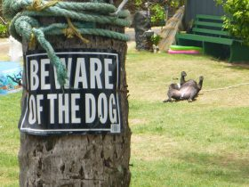 beware-of-the-dog-signs-2