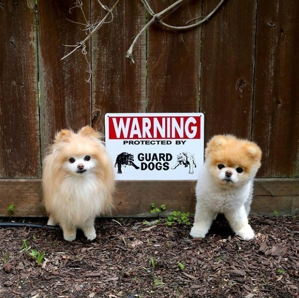 beware-of-the-dog-signs-5