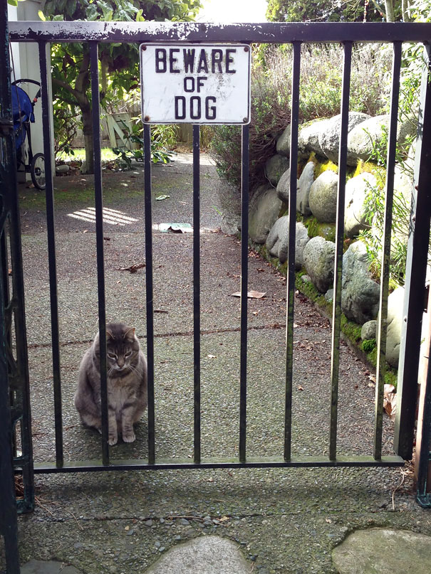 beware-of-the-dog-signs-6