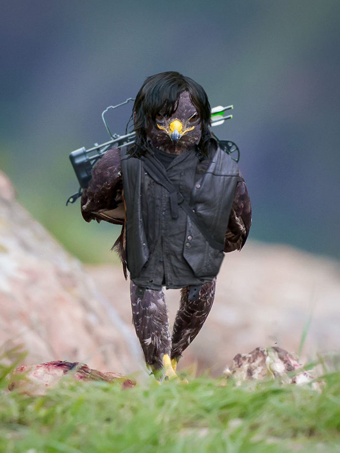 funny-hawk-photoshop-battle-11