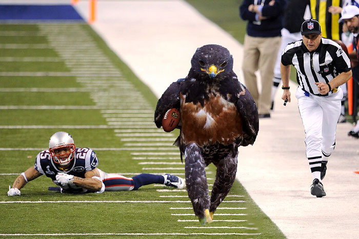 funny-hawk-photoshop-battle-14