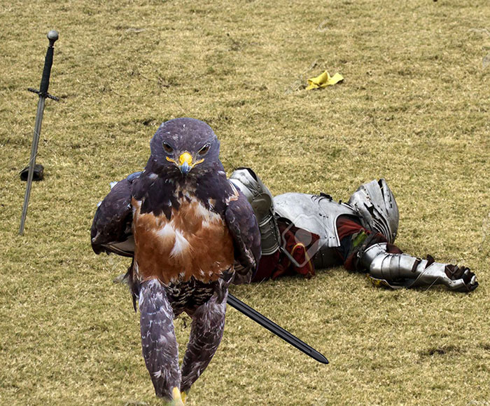 funny-hawk-photoshop-battle-16