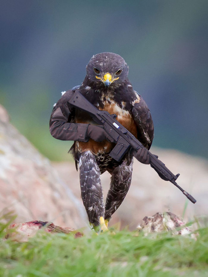 funny-hawk-photoshop-battle-3