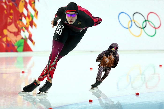 funny-hawk-photoshop-battle-8