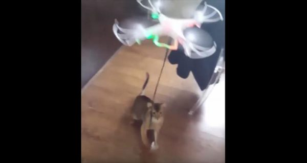 cat-drags-drone-4_r