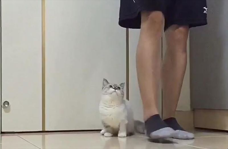 cat-follows-owner-around_r