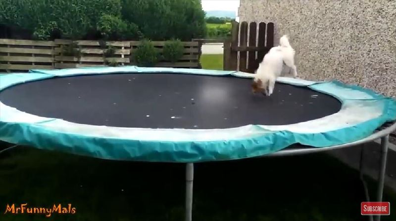 dogs-love-trampolines-compilation-2_r