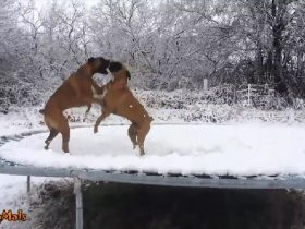 dogs-love-trampolines-compilation-3_r