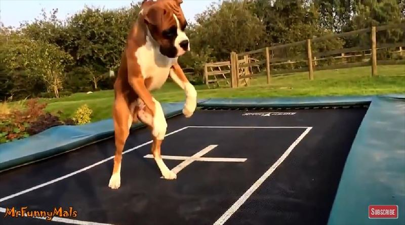 dogs-love-trampolines-compilation-5_r