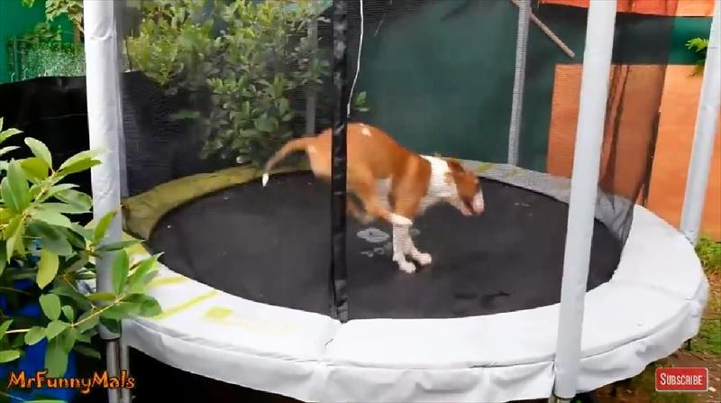dogs-love-trampolines-compilation_r