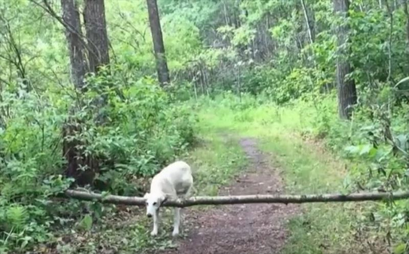 dogs-in-slow-motion-2_r