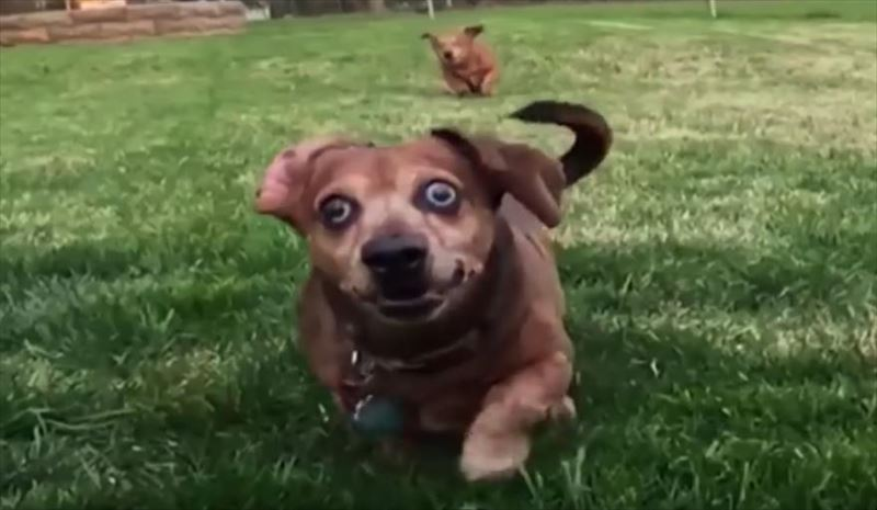 dogs-in-slow-motion-4_r