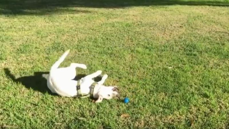 dogs-in-slow-motion-5_r