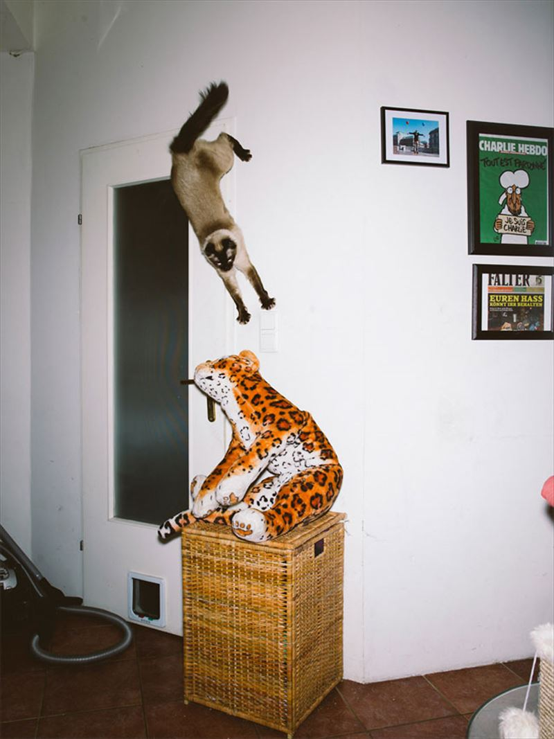 jumping-cats-7