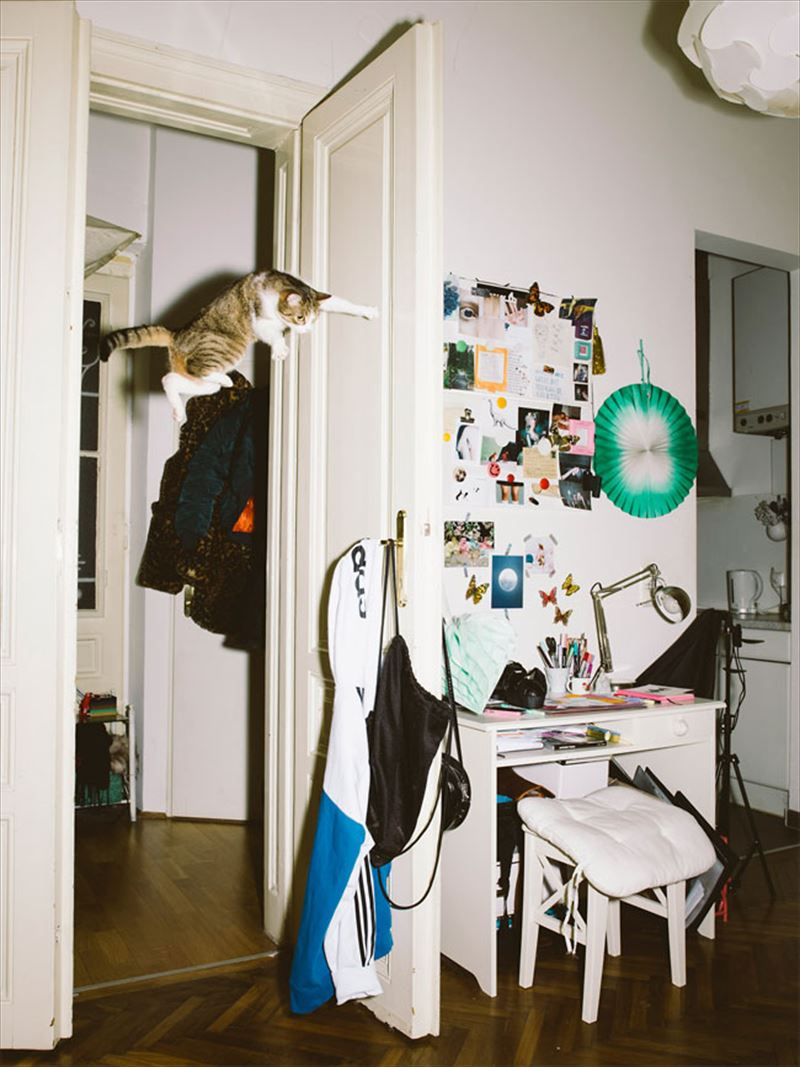 jumping-cats-9