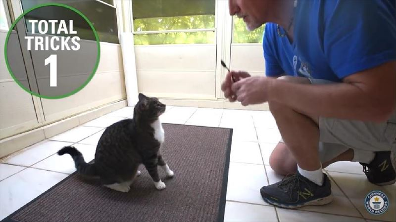 most-tricks-by-a-cat-in-one-minute-meet-the-record-breakers-2_r