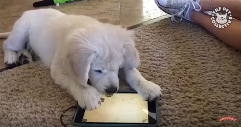 30-puppy-videos-compilation-2016-5_r