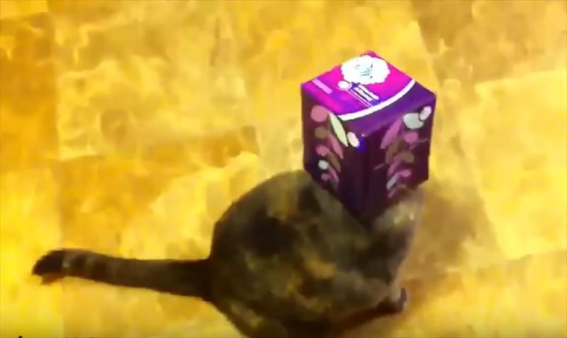 cats-getting-stuck-in-things-compilation-6_r