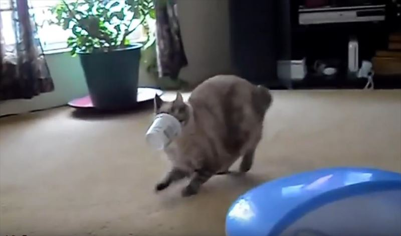 cats-getting-stuck-in-things-compilation_r