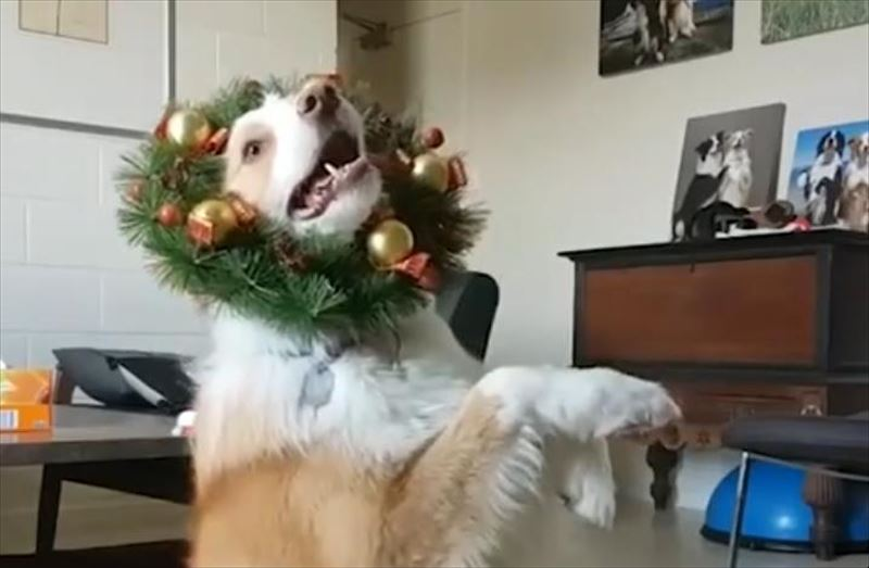 christmas-fun-dog-5_r