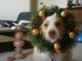 christmas-fun-dog-6_r