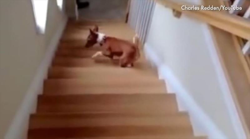 dogs-vs-stairs-3_r