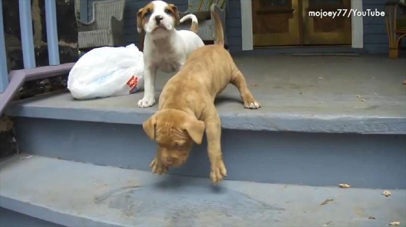 dogs-vs-stairs-4_r