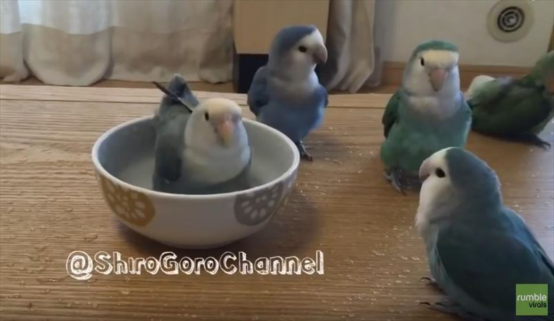 flock-of-parrots-take-turns-for-bath-time-4_r