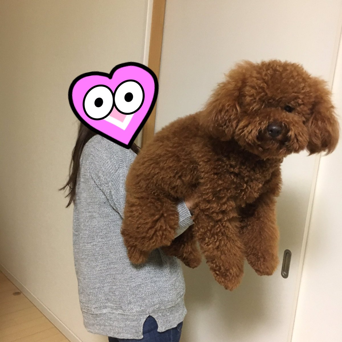hand-ride-poodle-2