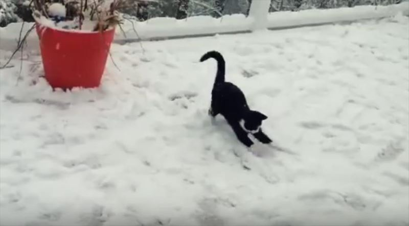 kittens-discovering-snow-for-the-first-time-compilation_r