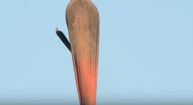 the-horrifying-act-of-yawning-pelicans-7_r