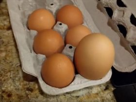triple-yolk-chicken-egg-2_r