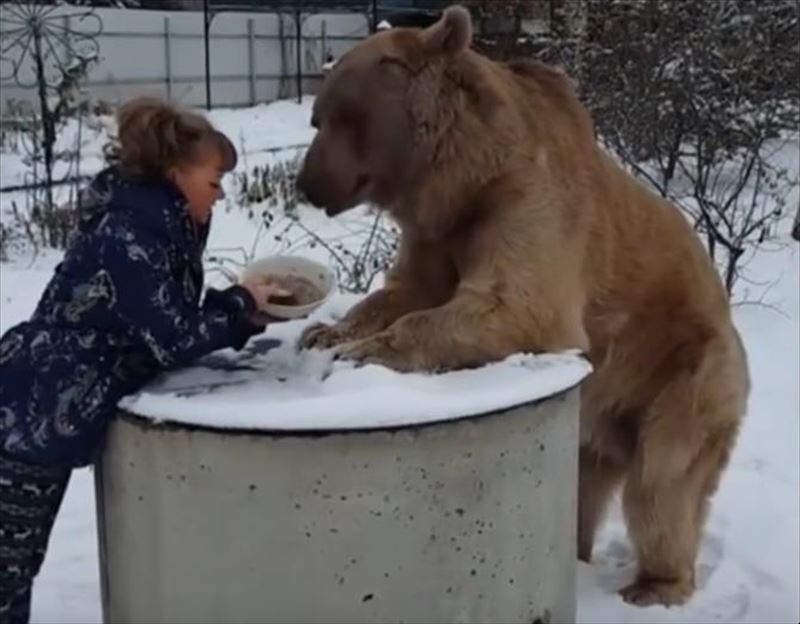 woman-and-bear-casually-enjoy-breakfast-together-3_r