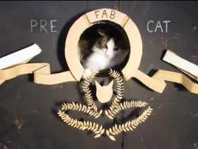 cardboard-ark-structure-cat-prefabcat